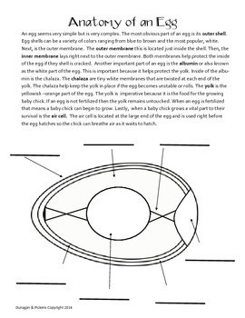 Egg STEM and other activities