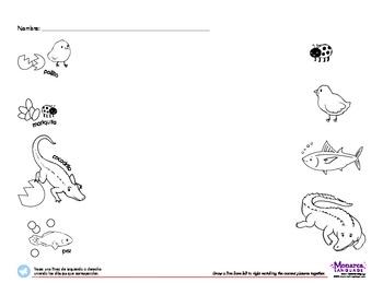 Egg-born Animals Spanish Lesson (3s) - Huevos Nacen Los Animales