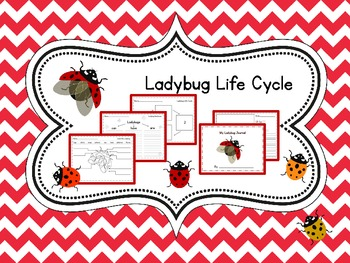 Egg to Ladybug