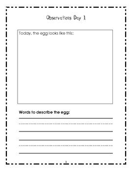 """""""Eggcelent"""" Experiments"""