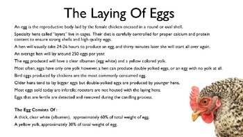 Eggs PowerPoint