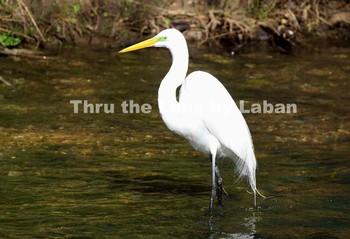 Egret Bird Standing in Water Stock Photo #56