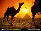 Modern Day Egypt - Arab Spring and Beyond