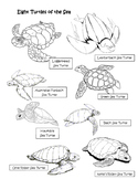 Eight Turtles of the Sea