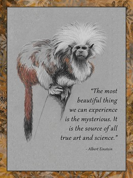Einstein Posters Quote 1 and 2 Bundle
