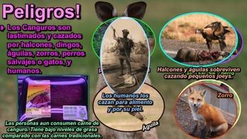 El Canguro - Presentación en PowerPoint y Actividades