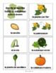 El Ciclo Vital de la Calabaza {Pumpkin Life Cycle in Spanish}