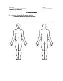 El Cuerpo Humano / Human Body Quiz