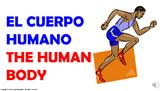 El Cuerpo Humano. / PPT. con audio.