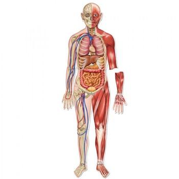 el cuerpo humano -- word se by henry llama's resources for, Skeleton
