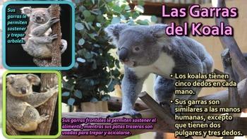 El Koala - Presentación en PowerPoint y Actividades