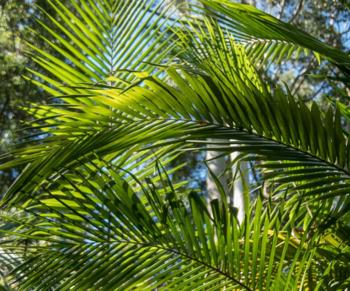 El Mundo Natural - The Natural World - Review Quiz