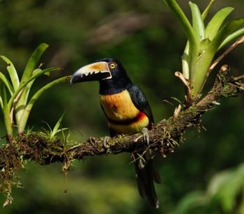 El Mundo Natural - The Natural World - Review Worksheet