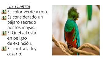 El Quetzal no muere nunca (actividad pre-lectura)