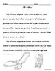 El búho - Actividades de lectura de no-ficción