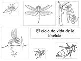 El ciclo de vida de la libelula.