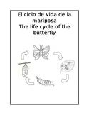 El ciclo de vida de la mariposa