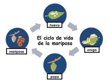 El ciclo de vida de la mariposa Activity Bundle