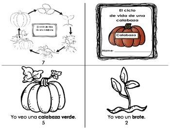 El ciclo de vida de una calabaza
