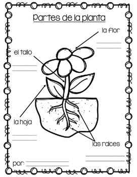 El ciclo de vida de una planta