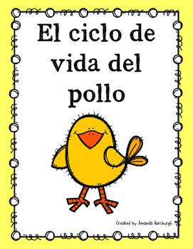 El ciclo de vida del pollo