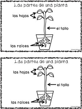 El diario de mi planta ~ Plant Journal (Spanish)