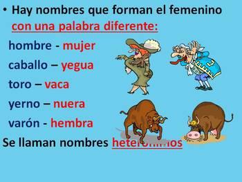 El género y el número en los nombres