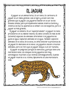 El jaguar reading: Animales peligrosos de América Latina