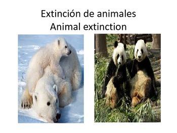 El medio ambiente  / The environment