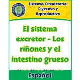 Sistemas Circulatorio,Digestivo y Reproductivo:Los riñones y el intestino grueso