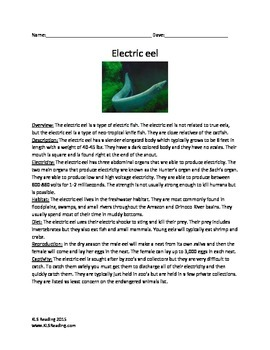 Electric Eel - Review Article Facts Information Questions