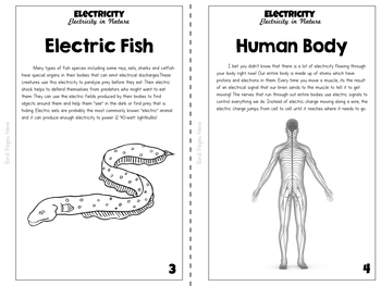 Electricity Unit Study: Electricity in Nature