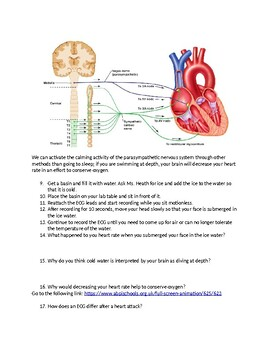 Electrocardiograms and The Dive Reflex