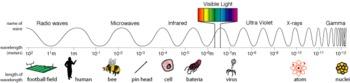 Electromagnetic Spectrum Webquest
