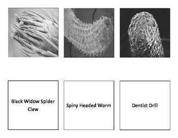 Electron Microscope Match-up