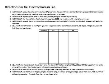 Electrophoresis Dry Lab
