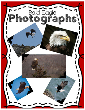 Elementary Animal Research Informational Text- Bald Eagles!