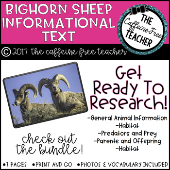 Elementary Animal Research Informational Text- Bighorn Sheep!