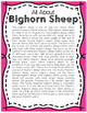 Elementary Animal Research Information- Bighorn Sheep!