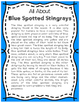 Elementary Animal Research Information- Blue Spotted Stingray!