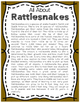 Elementary Animal Research Informational Text- Rattlesnake!