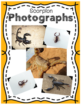 Elementary Animal Research Informational Text- Scorpion!