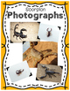 Elementary Animal Research Information- Scorpion!
