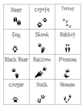 Elementary Animal Track Flashcards