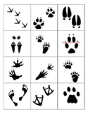Elementary Animal Track Flashcards