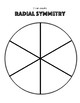 Elementary Art Worksheet. Identifying radial symmetry. Symmetrical Drawing.