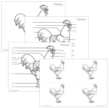Chicken Nomenclature - Elementary