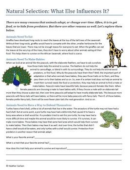 Elementary Evolution Packet