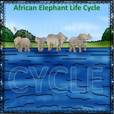 Elephant (Life Cycle Spinner)