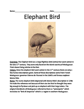 Elephant Bird - Extinct lesson review article questions facts vocabulary